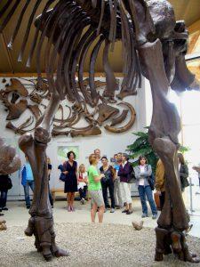 Vereinsexkursion 2011, Naturkunde- und Mammutmuseum Siegsdorf, Foto: Stadtarchäologie Hall i.T.